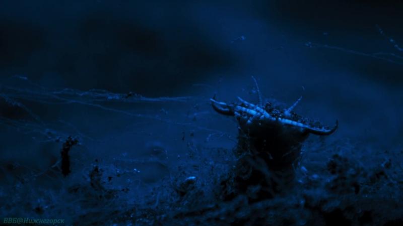 BBC «Голубая планета 2 (3). Коралловые рифы» (Познавательный, природа, животные, 2017)