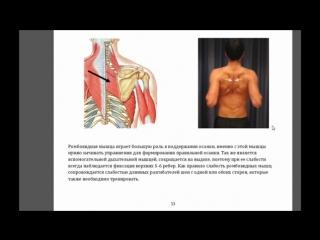 Ромбовидная малая и грудная мышцы. Или почему немеют руки
