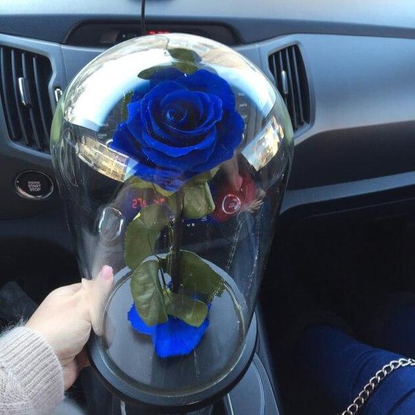 Фото роз в машине на стекле