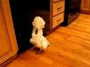 Очень смешной попугай! Прикол всех времен Смеялся до слез с друзьями