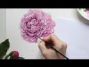 Акварель _ Пион (Watercolor _ Peony)
