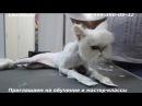 Стрижка агрессивных кошек и котиков.