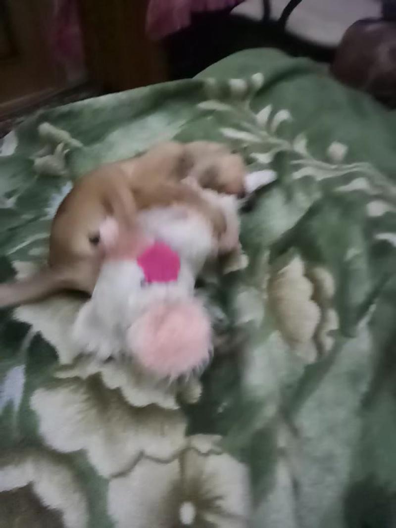 Лайфхак как избавиться от мышей в доме