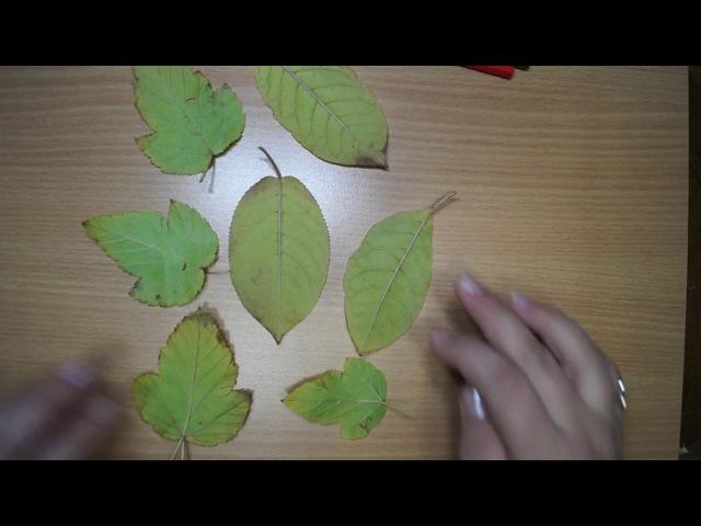 Рисование в технике фроттаж с помощью листочков