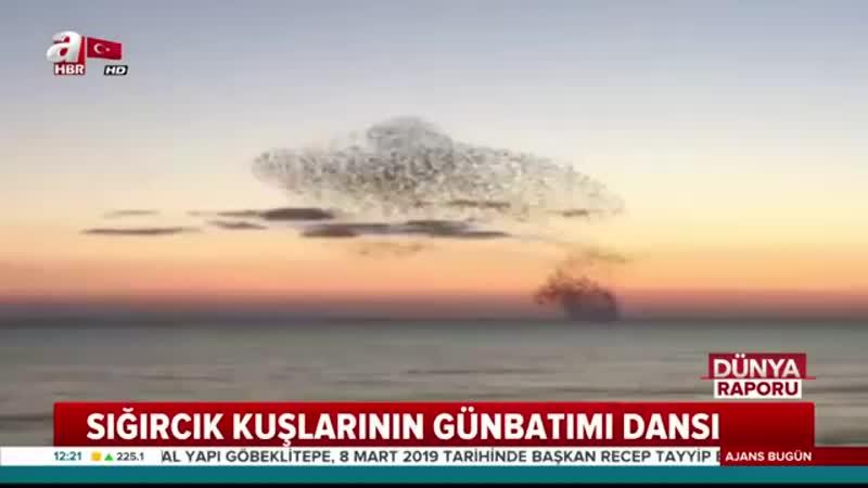 """A Haber on Instagram """"Sığırcık kuşlarının gün batımı dansı..."""".mp4"""