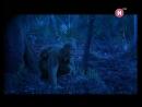 Легенды о чудовищах - Фильм 1