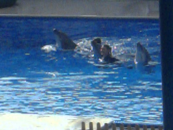Супертанец с дельфинами