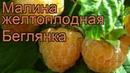 Малина желтоплодная Беглянка rubus beglianka 🌿 Беглянка обзор как сажать саженцы малины Беглянка
