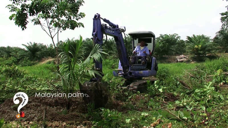 Did You Know - Palm oil contributions for the Environment