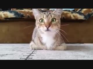 котёнок смотрит триллер