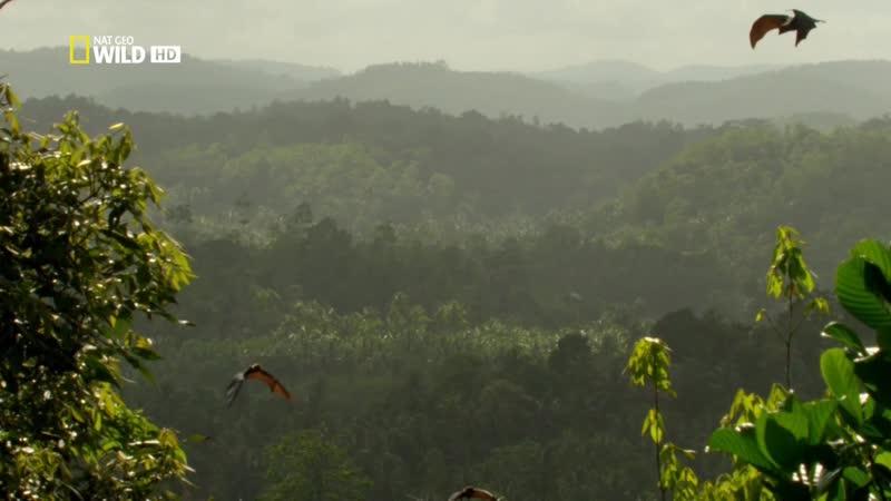 Дикая Шри Ланка 3 серия Облачный лес