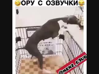 минутка юмора с животными