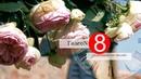 ГалеоN 8. Сан Джиминьяно Тоскана, долина Сузы, аббатство Новалеза Италия