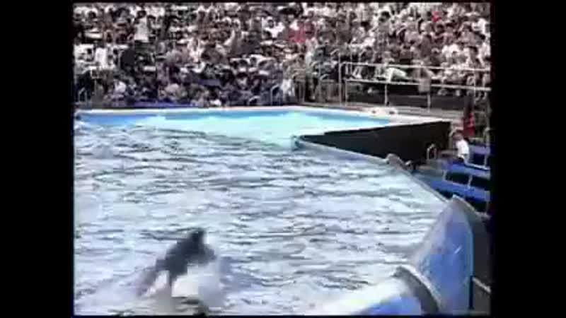 Дружба человека и дельфина