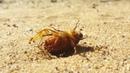 Dying beetle, pilliga forest jeremy hegge