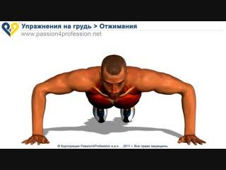 Спорт 24/7. Упражнения для груди - Отжимания