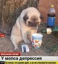 Фотоальбом человека Денис Соломатов