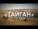 Парк львов Тайган нуждаетя в помощи!