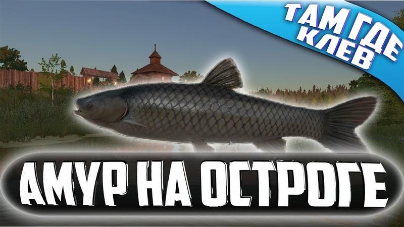 Русская Рыбалка 4●ТАМ ГДЕ КЛЕВ●ХОРОШИЕ АМУРЧИКИ НА ОСТРОГЕ●