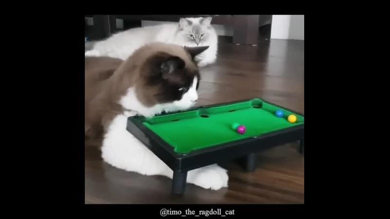 Rкотейка не понимает куда деваются шарики в игре и хочет чтобы они опять появились