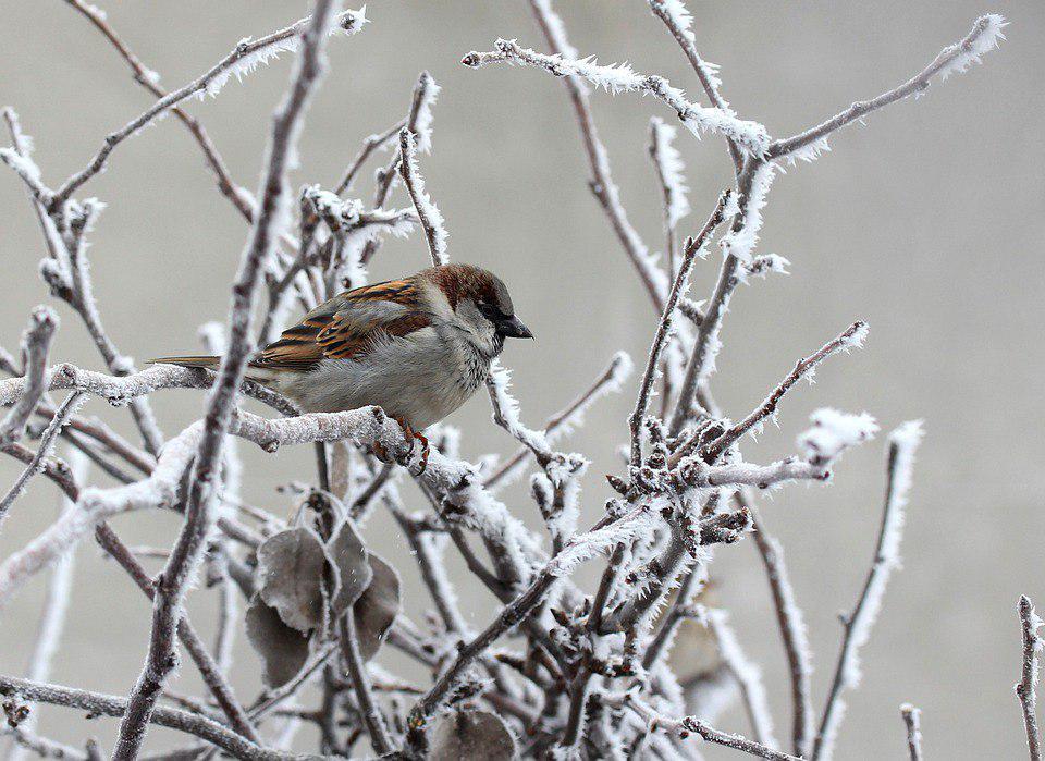 В парке «Кузьминки-Люблино» расскажут, как кормить птиц зимой
