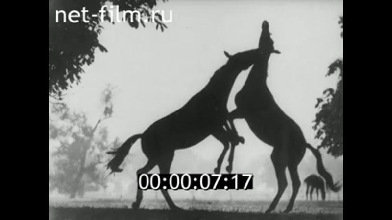 1991г Ичалковский конный завод №27 Мордовский