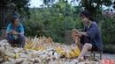 金黄的季节,载满了收获的喜悦和玉米的香甜 Corn   Liziqi Channel