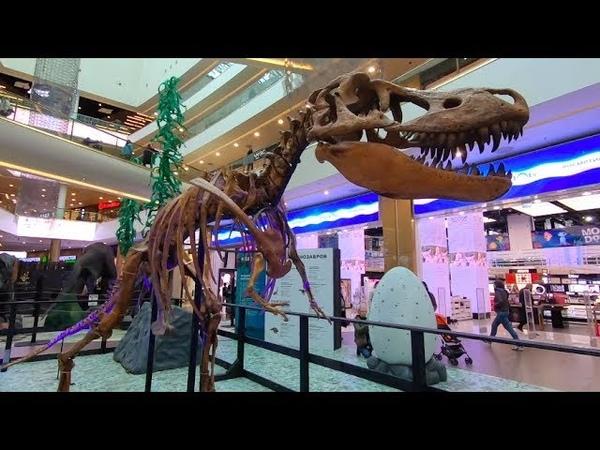 Куда сходить в СПБ? На Выставку динозавров в ТРЦ Галерея 17 сентября - 13 октября.