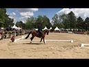 Thomas Türmer Working Equitation Team Dressur Nations Cup Pferd International München