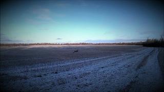 1-й день зимы, первый снег и волки в лесу!