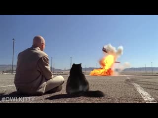 OwlKitty попала в Breaking Bad ЖЮ