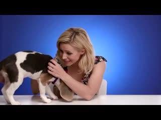 Кристен белл и puppy