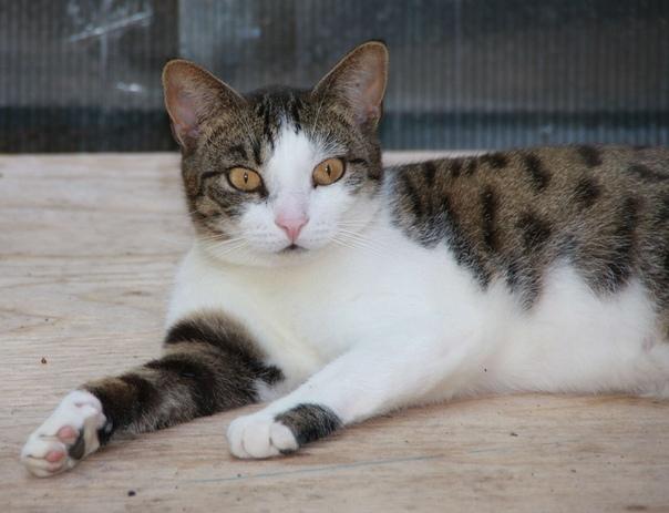 Консерва для кошек Purina Pro Plan Junior Nutrisavour
