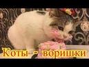 Коты - воришкиСмешное про животныхПриколы с котами Видео про котовСоздай себе хорошее настроение