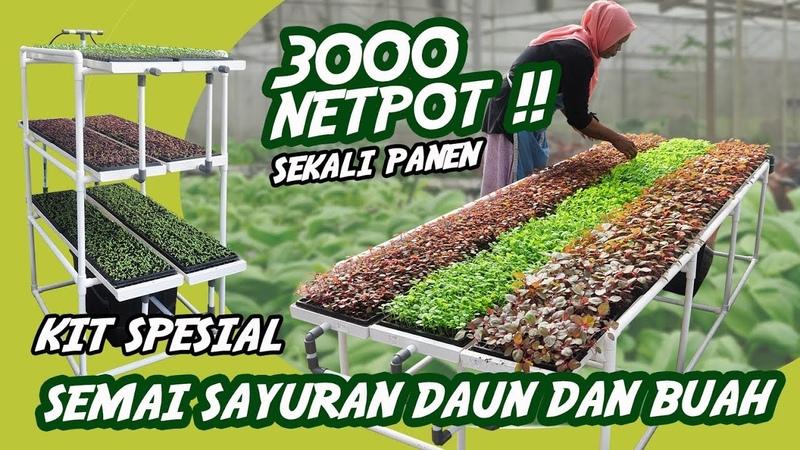 KIT Semai Bibit Hidroponik Konvensional BISA BUAT 3000 LUBANG TANAM sekali semai hidroponik