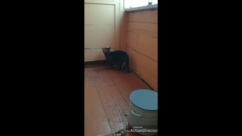 Кот мухолов