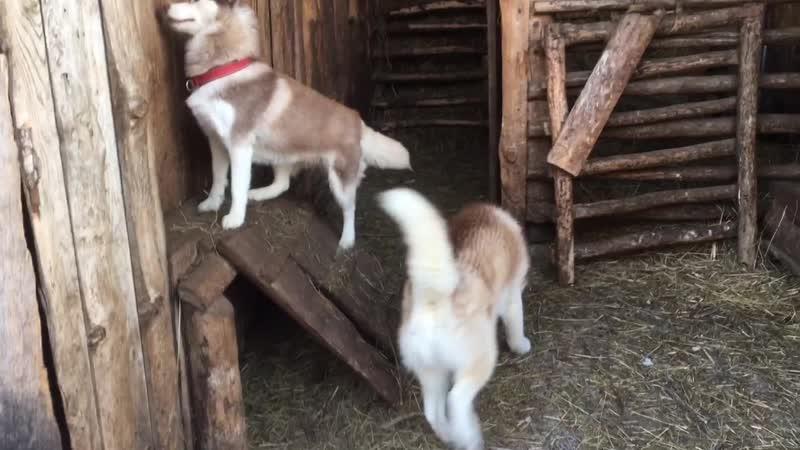 Кен Салли и Вика