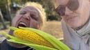 Vilniaus kukurūzų laukas Вильнюс кукурузное поле