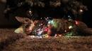 Новогодний Кот Обои На Рабочий Стол