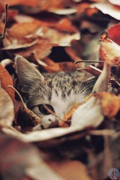 Осенних котиков вам в ленту!