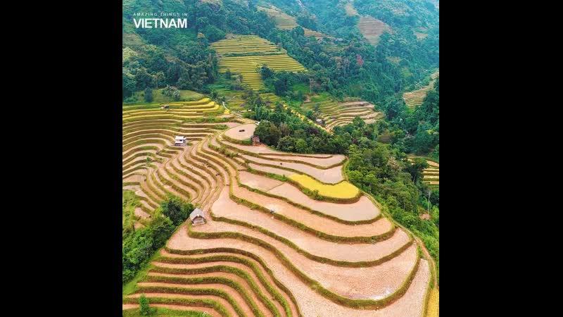 Красота рисовых плантаций в Су Фи