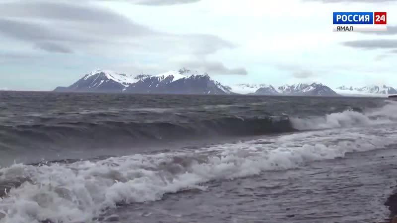 Ученые исследуют самочувствие Арктики к каким выводам пришли специалисты