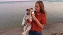 Fox terrier Taffy on vacation Dog tricks Фокстерьер Тэффи на каникулах