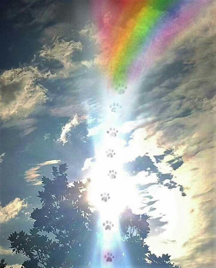 бежать по радуге картинки день