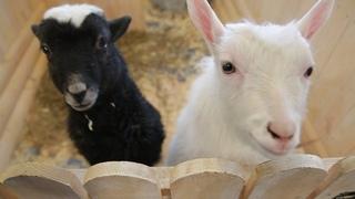 UTV. Уфимский контактный зоопарк просит горожан о помощи. Скоро животным будет нечего есть