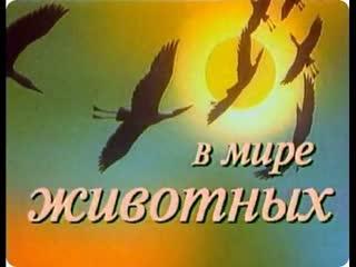рома скат и онтон совэ (ГРАЙМ ЗООПАРК #73)