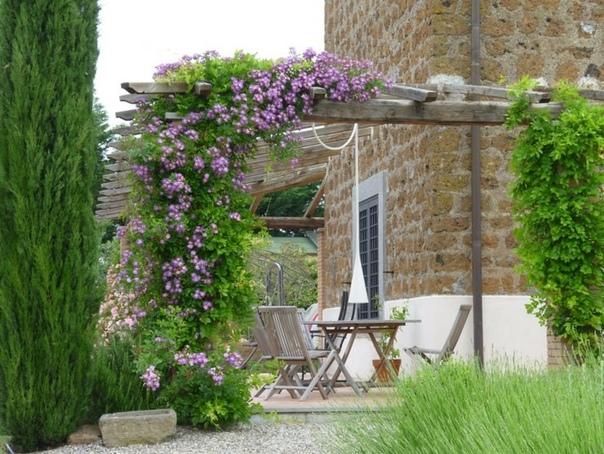 Вьющиеся растения для сада и дачи Садовый участок с различными изгородями, беседками, хозяйственными постройками невозможно представить без плетущихся растений, которые преображают и украшают