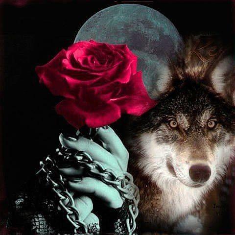 особенностей картинки волк с розами получившуюся массу