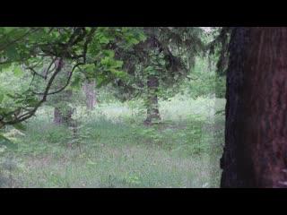 Раннее утро в нижегородском лесу