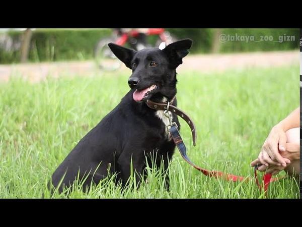 Замечательная собачка Ушаня, или просто Шаня, ищет дом!